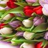 Offerta bouquet di fiori